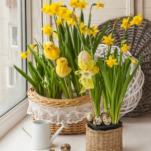 Daffodils and Easter theme.